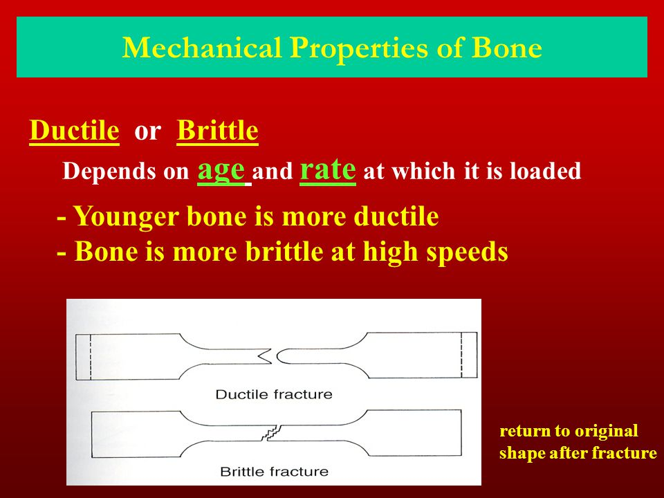 Mechanical Properties of Bone