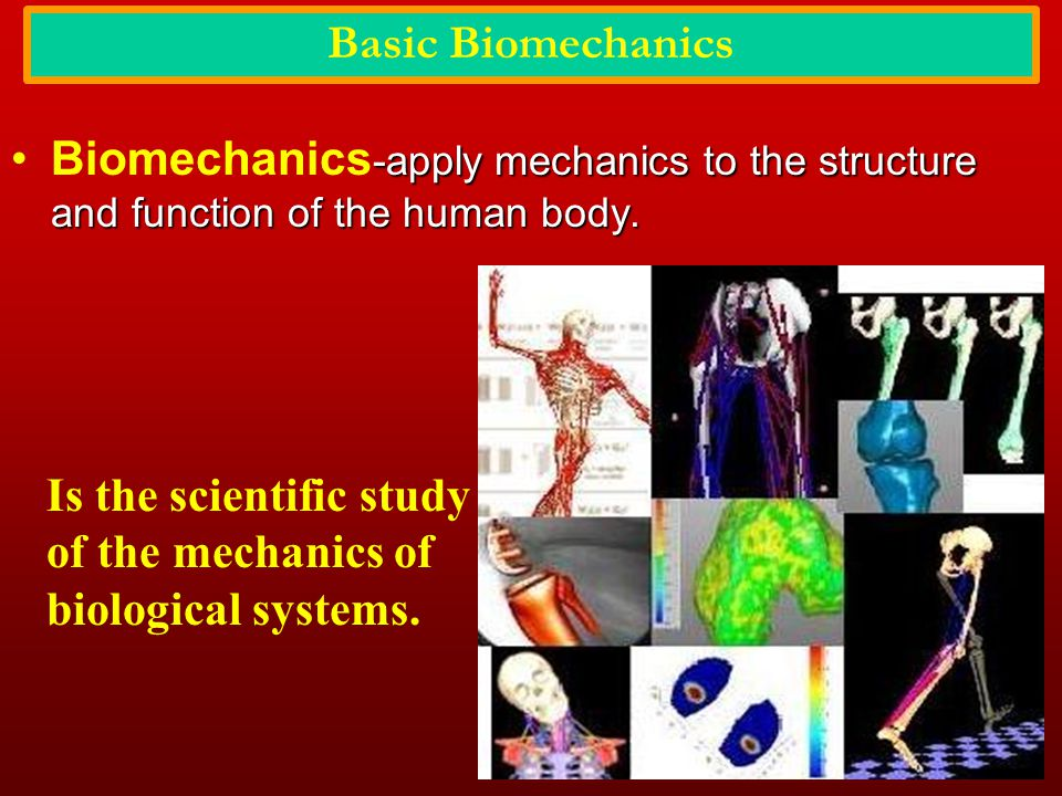 Basic Biomechanics Biomechanics-apply mechanics to the structure and function of the human body.