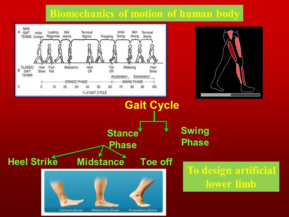 Biomechanics of motion of human body To design artificial lower limb
