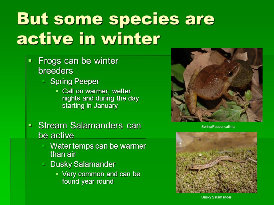 But some species are active in winter