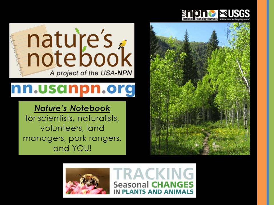 Nature's Notebook for scientists, naturalists, volunteers, land managers, park rangers, and YOU! Photo credit: L. Romano.