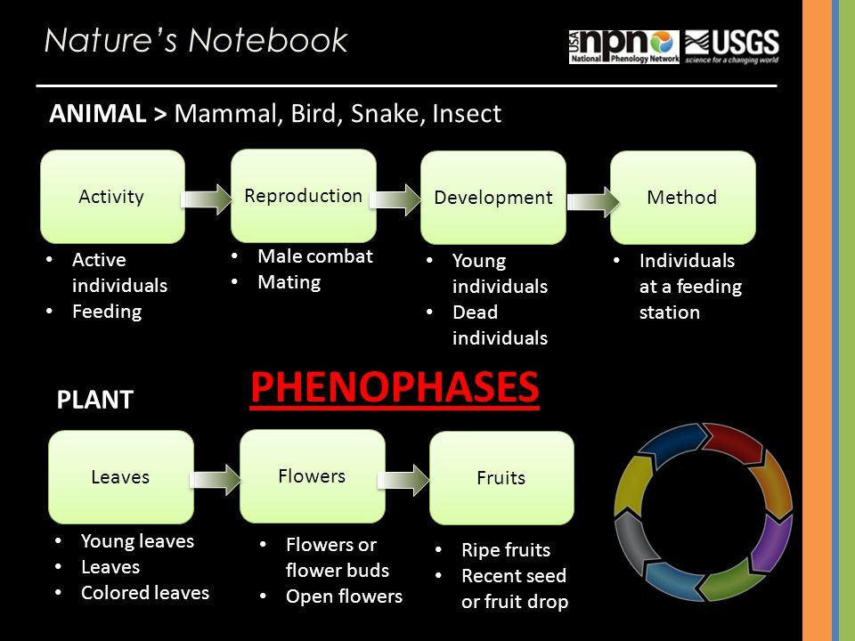 PHENOPHASES Nature's Notebook ANIMAL > Mammal, Bird, Snake, Insect