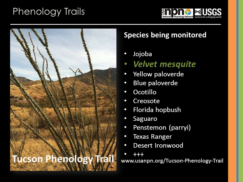 Tucson Phenology Trail