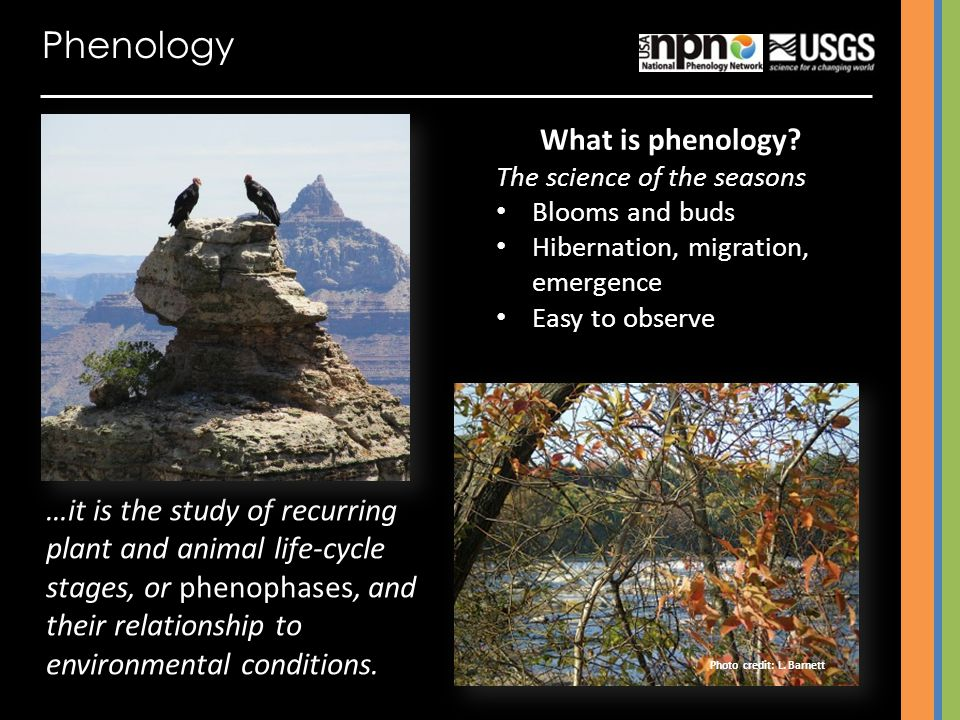 Phenology What is phenology