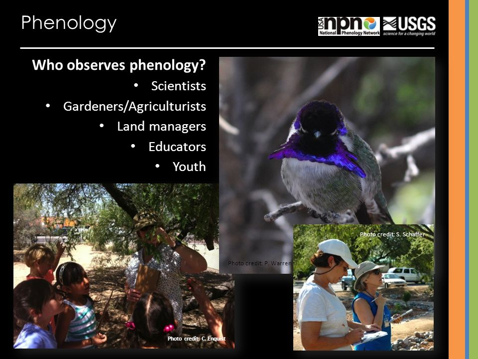 Phenology Who observes phenology Scientists Gardeners/Agriculturists