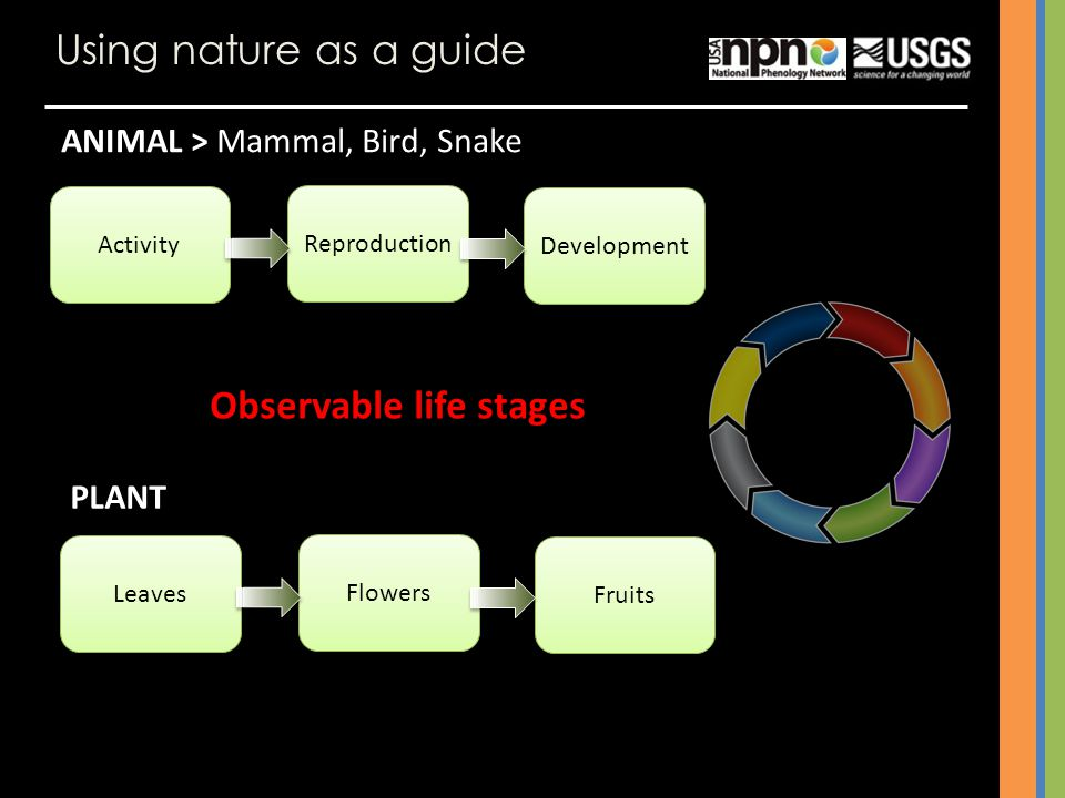 Observable life stages