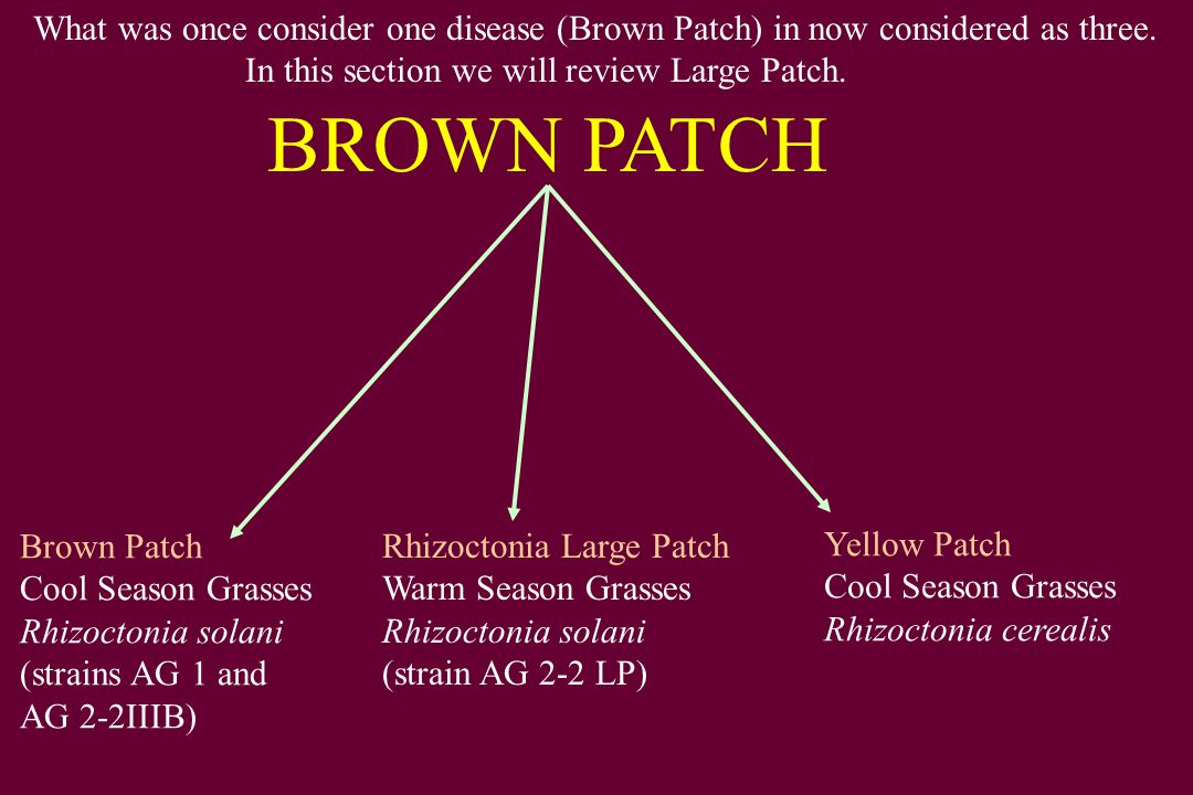What was once consider one disease (Brown Patch) in now considered as three.