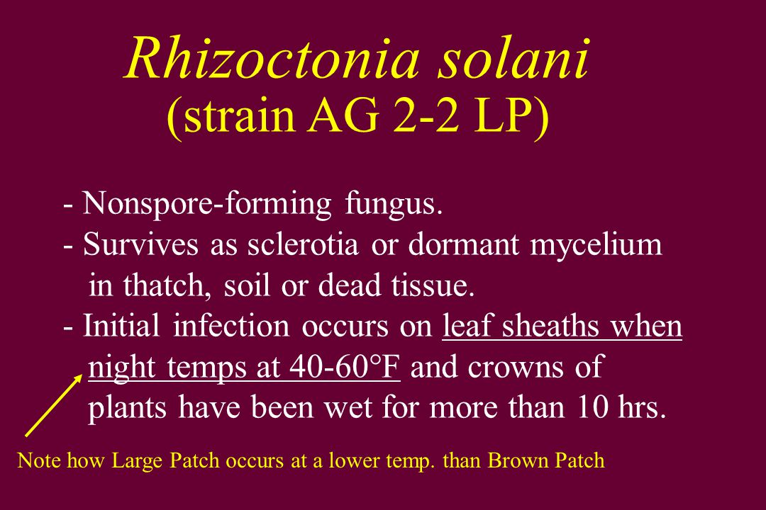 (strain AG 2-2 LP) Rhizoctonia solani Nonspore-forming fungus.