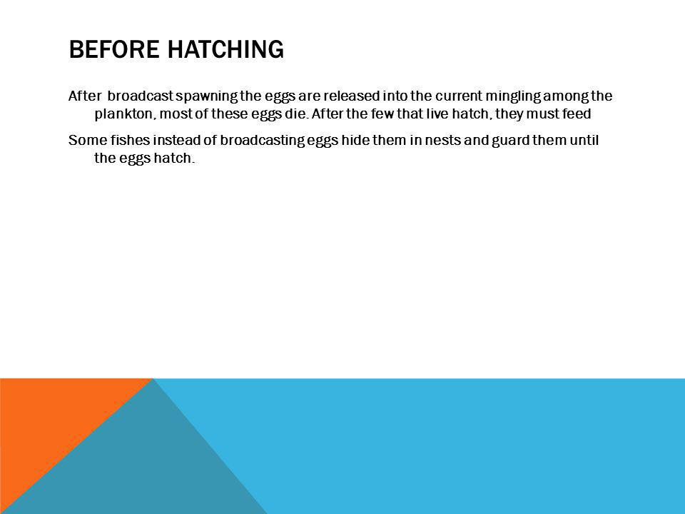 Before hatching