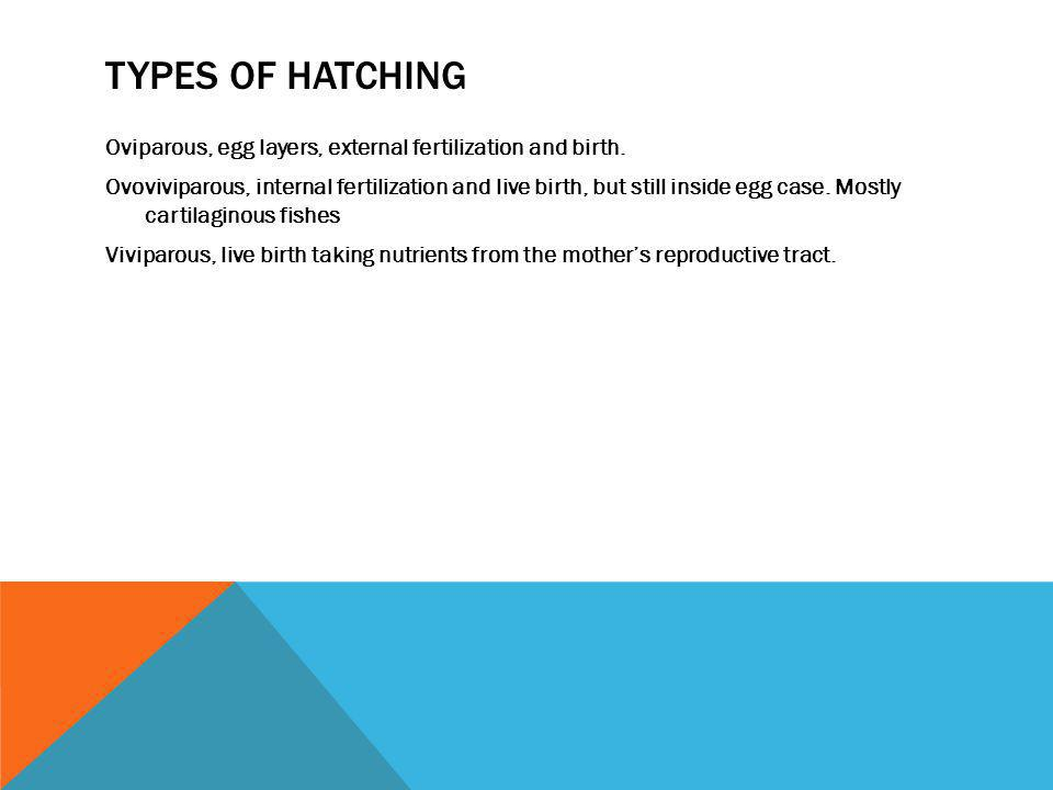 Types of hatching