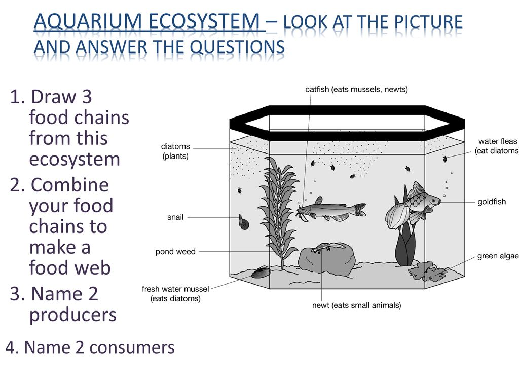 Food Chains And Food Webs Ppt Download