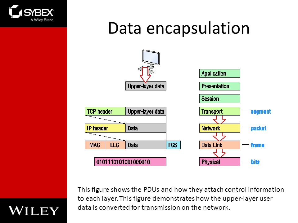Chapter 2 Ethernet Networking And Data Encapsulation Ppt Video Online Download