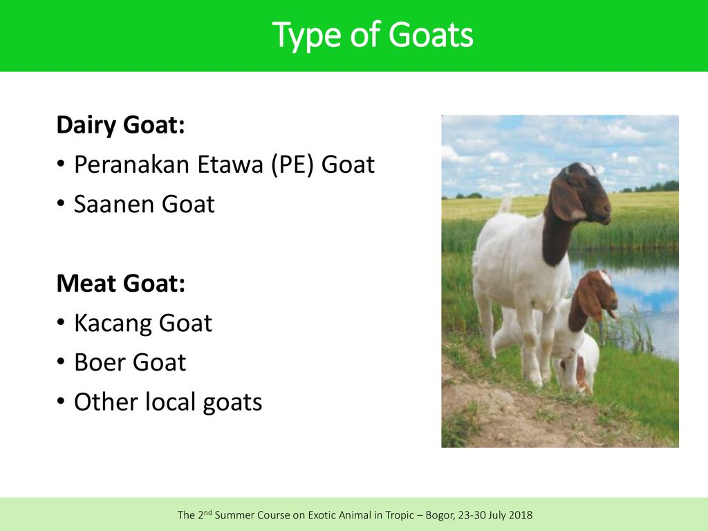 Feed Formulation and Feeding Management of Dairy Goat - ppt