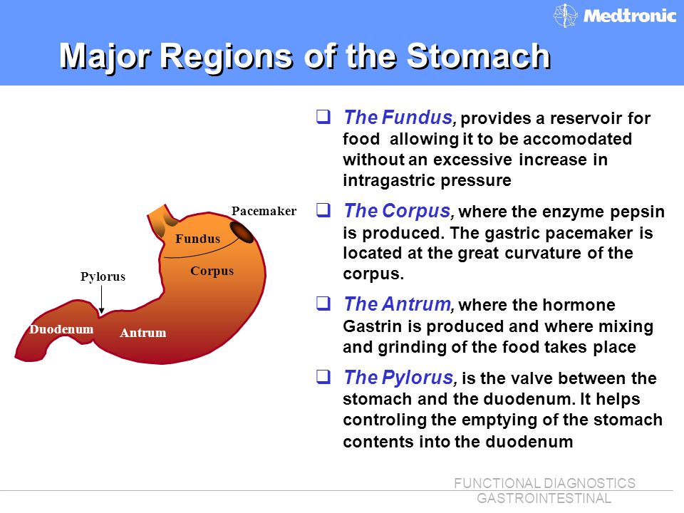 Major Regions of the Stomach