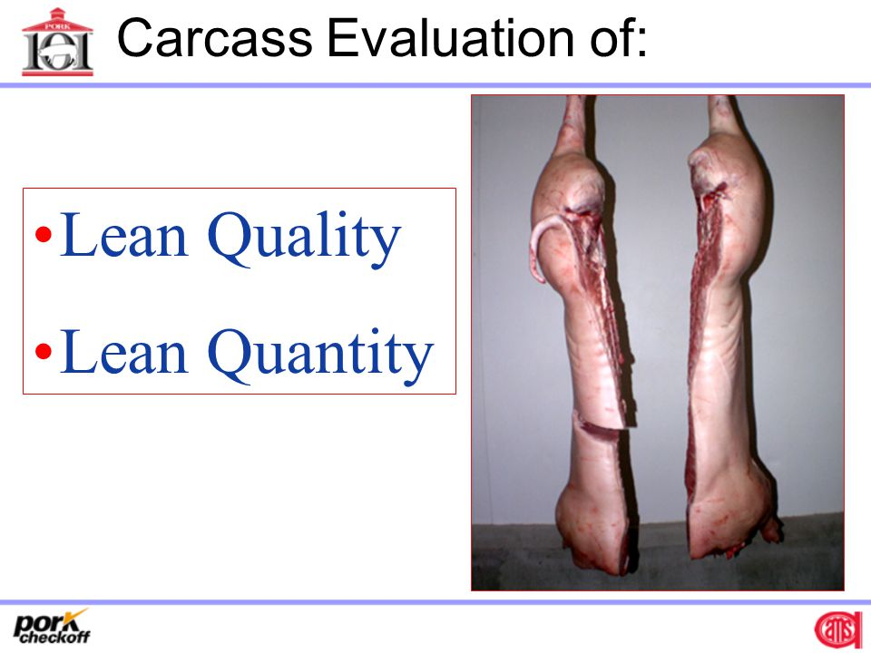 Carcass Evaluation of: