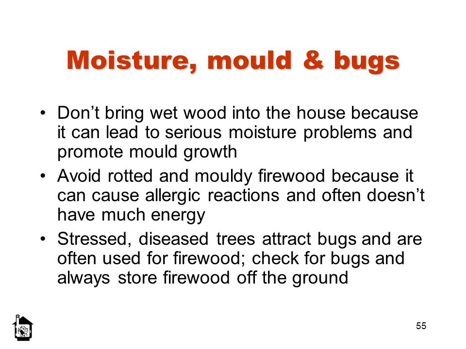 Moisture, mould & bugs Don't bring wet wood into the house because it can lead to serious moisture problems and promote mould growth.