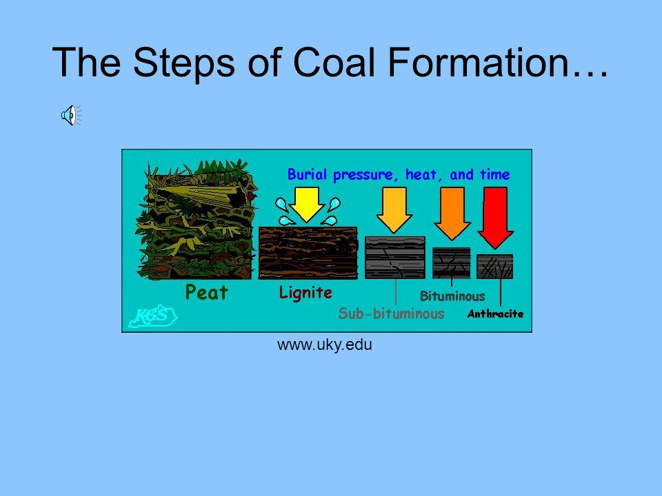 The Steps of Coal Formation…