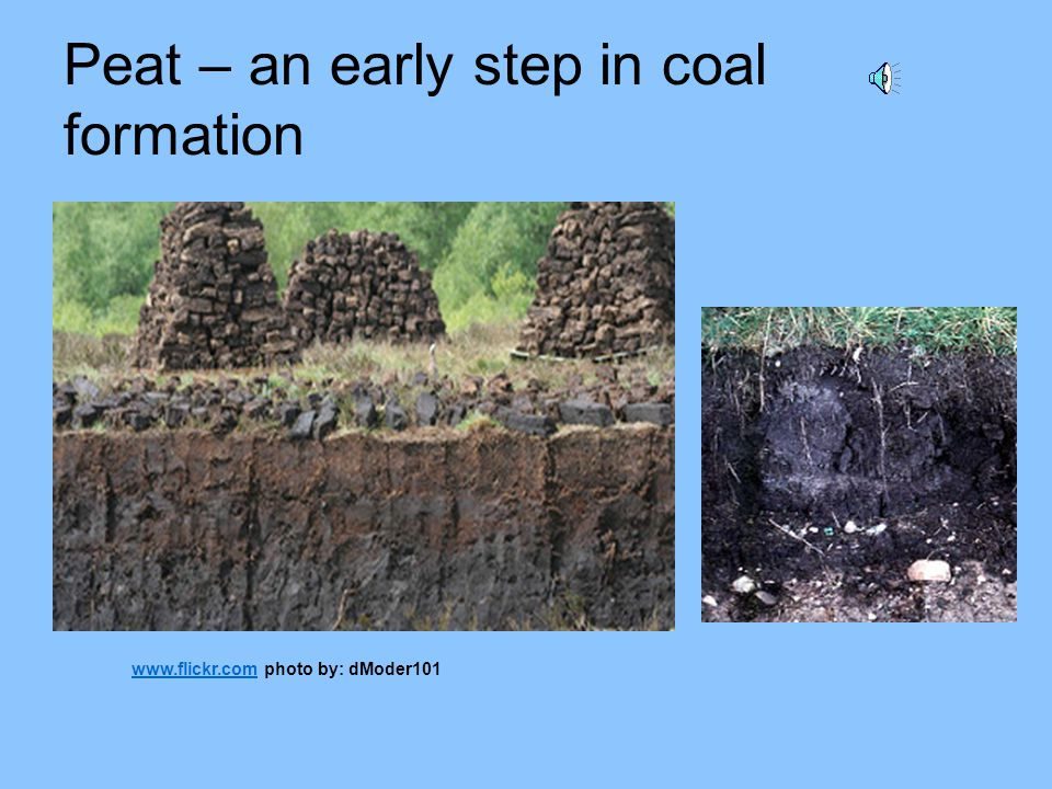 Peat – an early step in coal formation