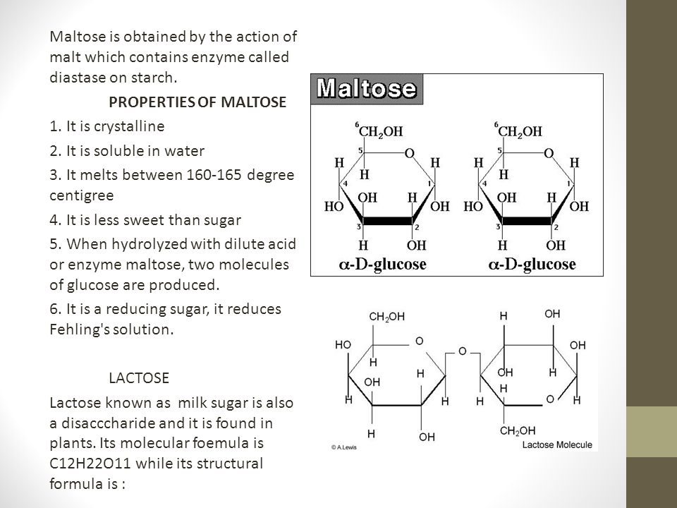 Maltose is obtained by the action of malt which contains enzyme called diastase on starch.