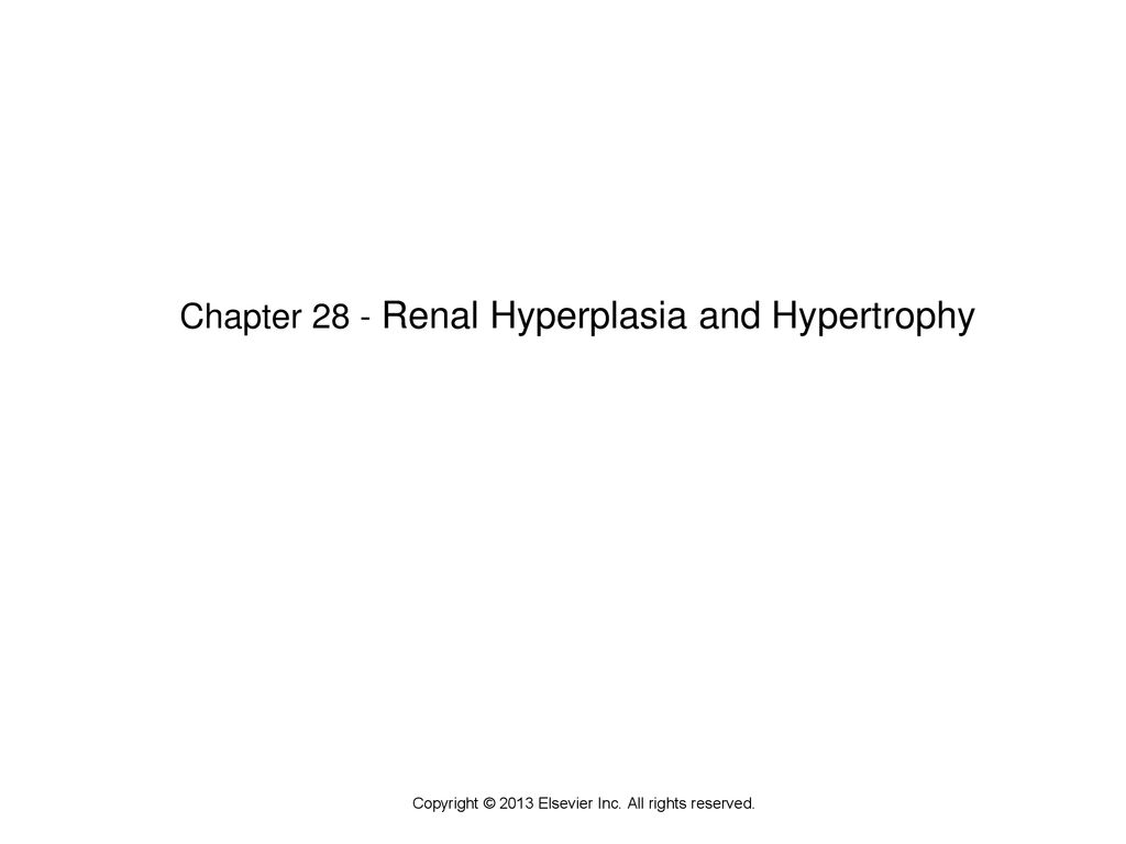 Chapter 28 - Renal Hyperplasia and Hypertrophy
