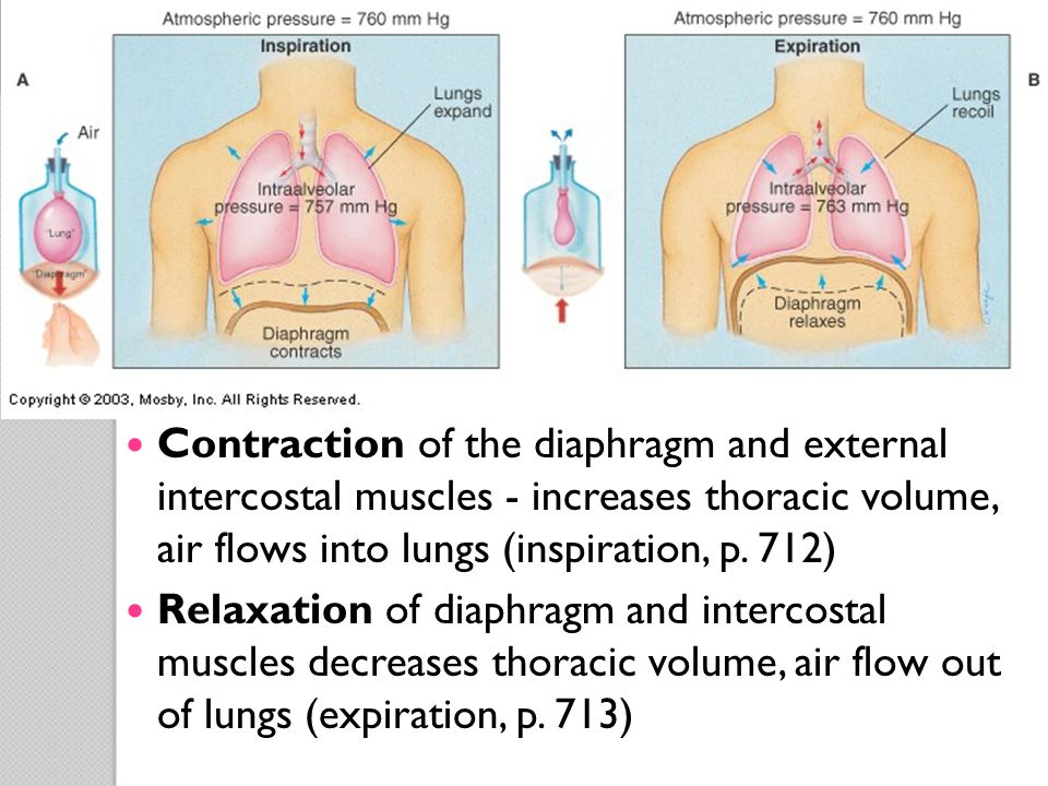 Respiratory System Physiology - ppt download