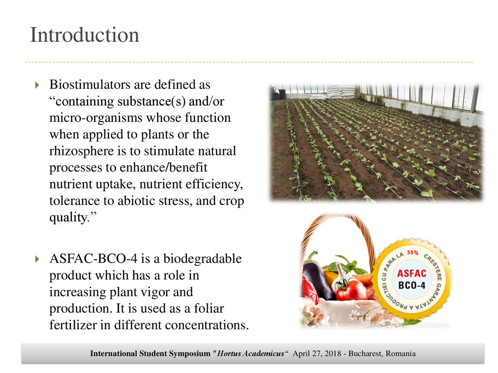 STUDY ON THE USE OF ASFAC IN LACTUCA SATIVA L  CULTURE - ppt download