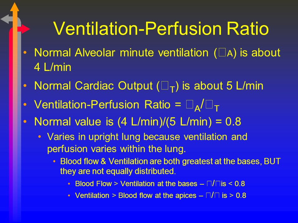 Ventilation Perfusion Ratio : Ventilation perfusion relationships ppt download