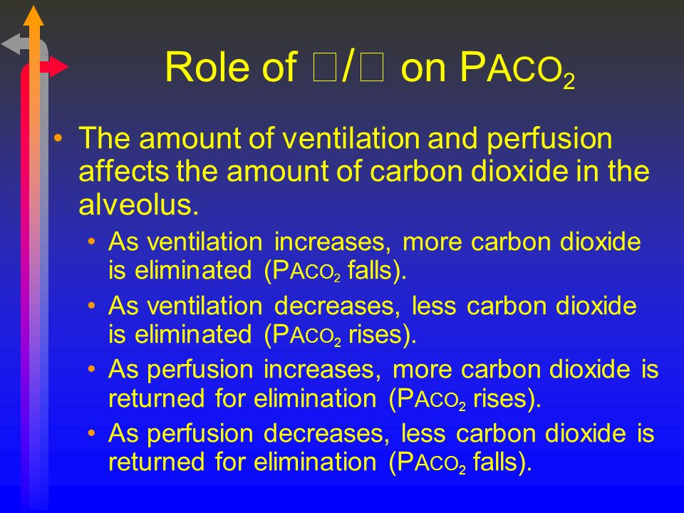 Role of / on PACO2 The amount of ventilation and perfusion affects the amount of carbon dioxide in the alveolus.