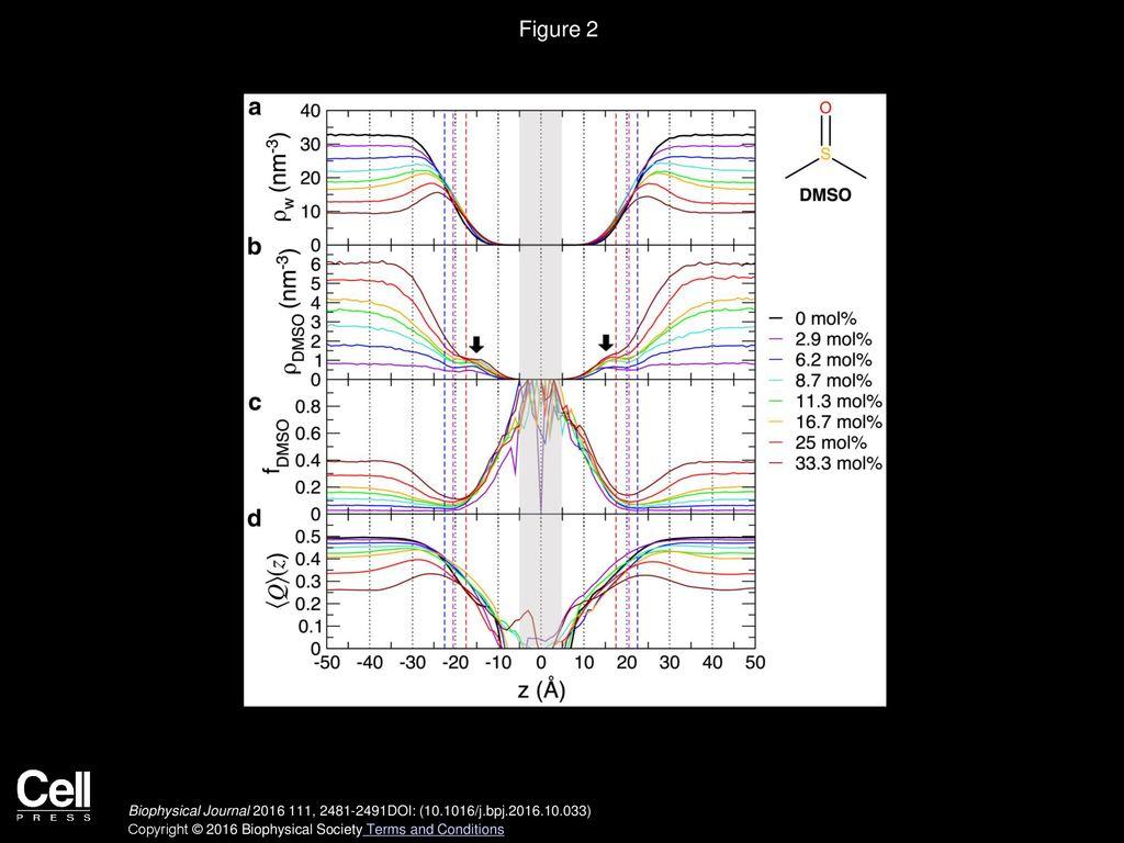 Yuno Lee, Philip A  Pincus, Changbong Hyeon Biophysical Journal