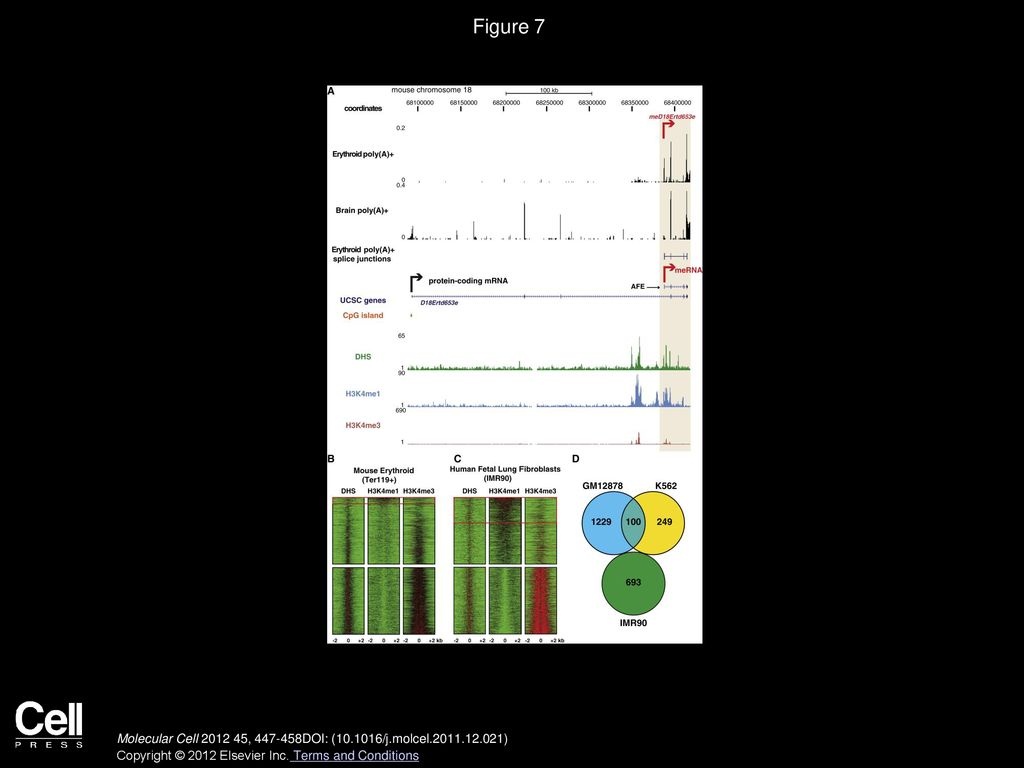 Intragenic Enhancers Act as Alternative Promoters - ppt download