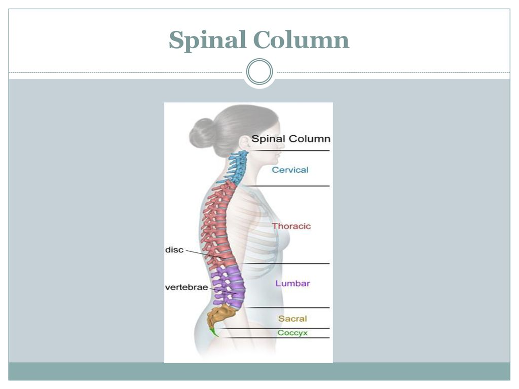 ICD-10-PCS Spinal Procedures - ppt download