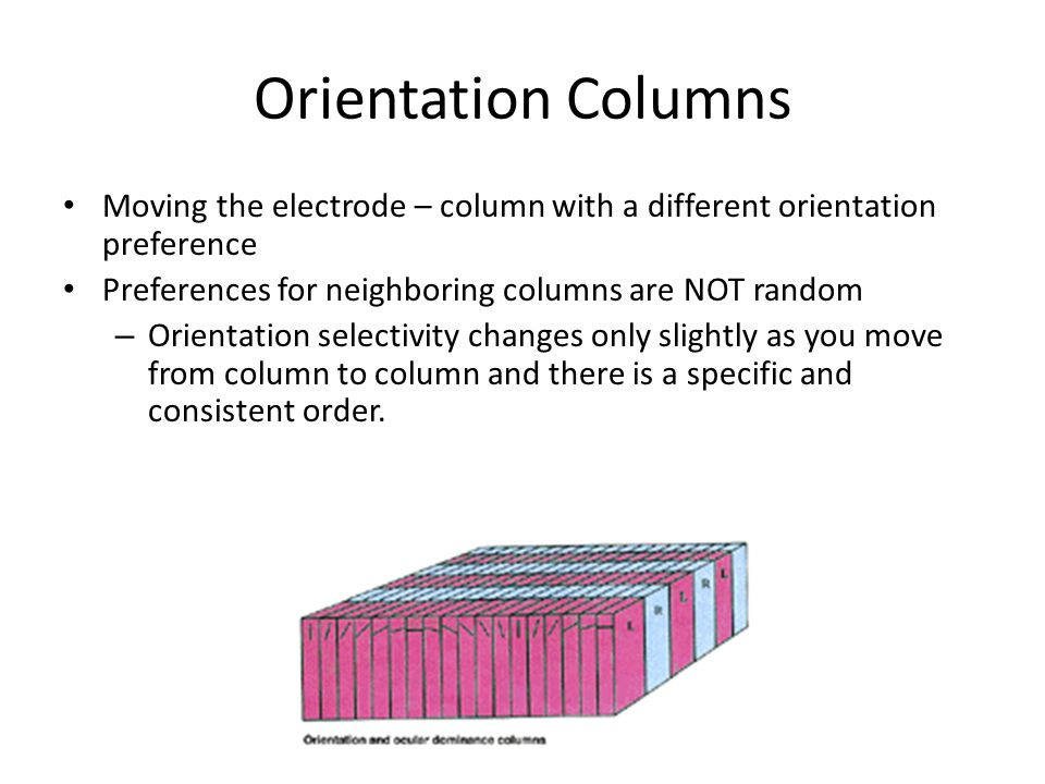 Orientation Columns Moving the electrode – column with a different orientation preference. Preferences for neighboring columns are NOT random.