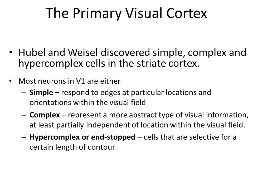 The Primary Visual Cortex - ppt video online download