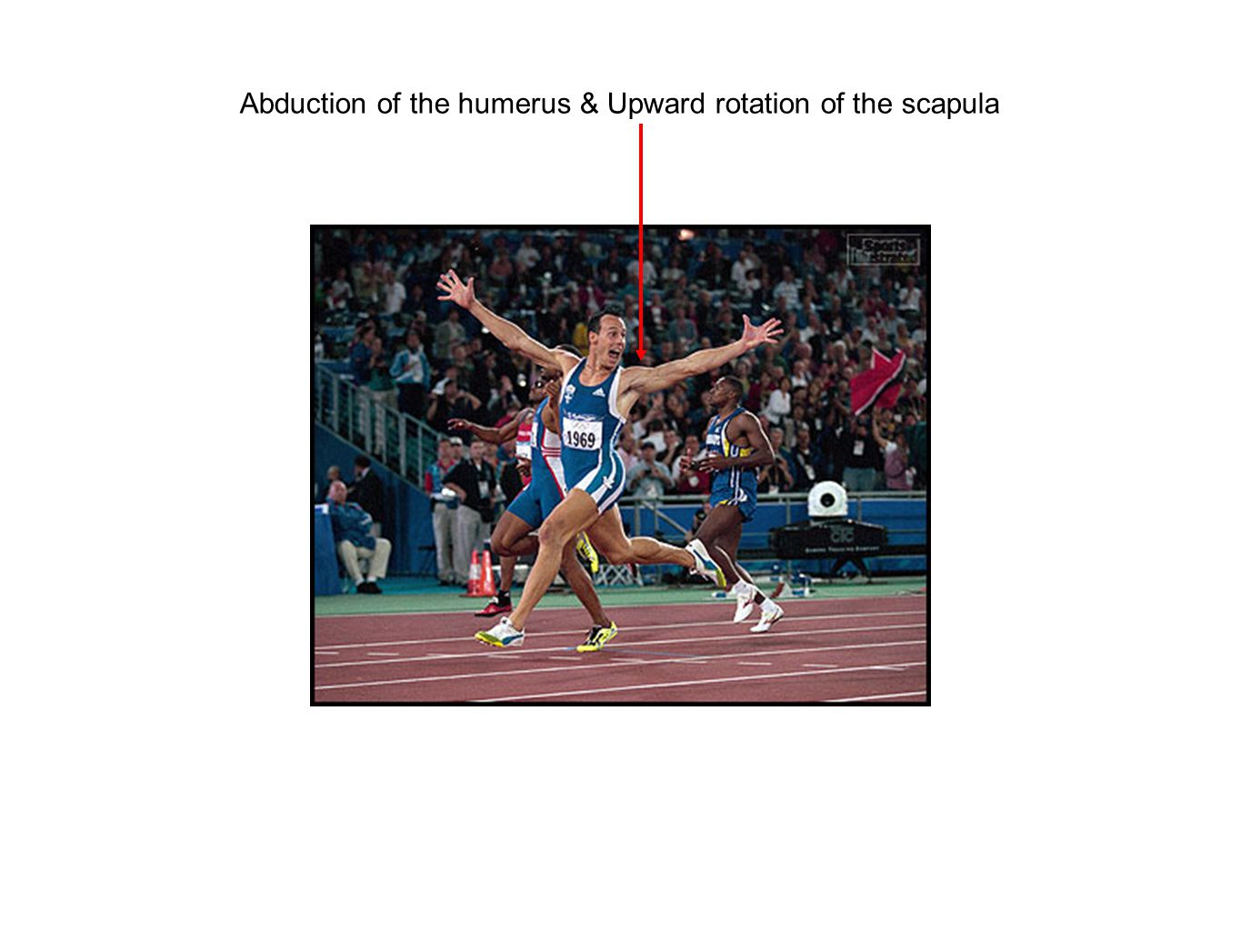 Abduction of the humerus & Upward rotation of the scapula