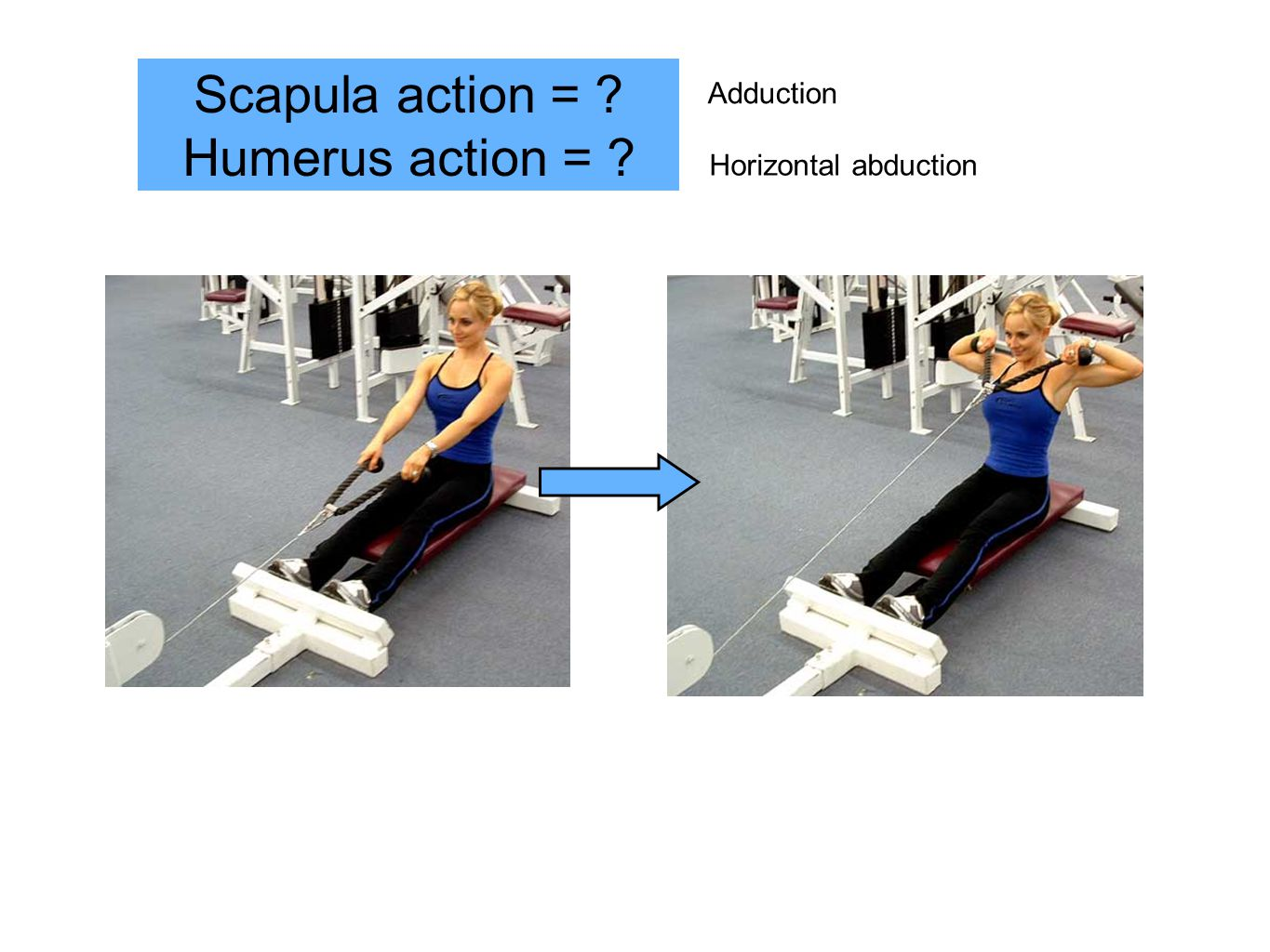 Scapula action = Humerus action = Adduction Horizontal abduction