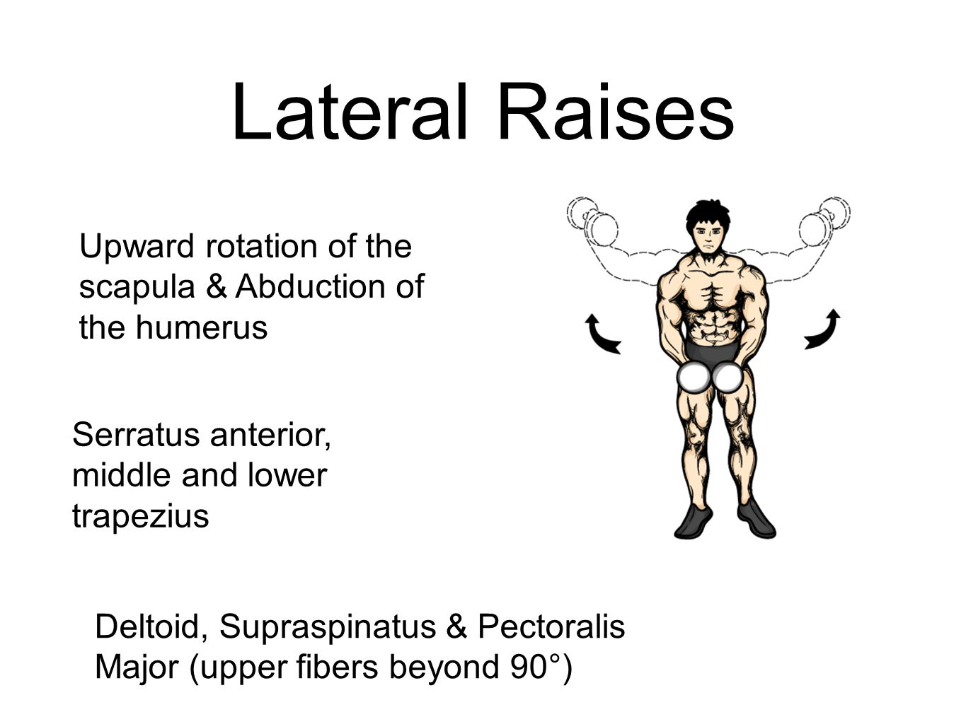 Lateral Raises Upward rotation of the scapula & Abduction of the humerus. Serratus anterior, middle and lower trapezius.