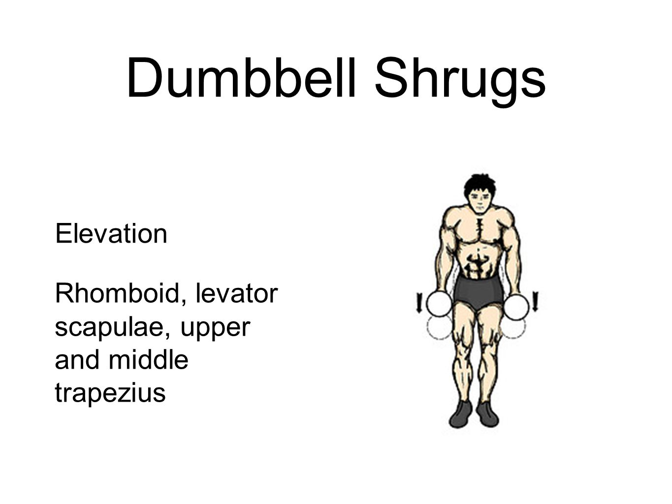 Dumbbell Shrugs Elevation