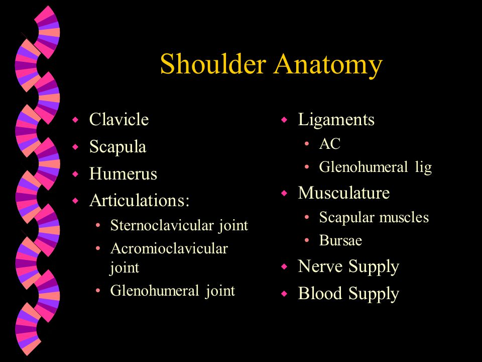 Shoulder Anatomy Clavicle Scapula Humerus Articulations: Ligaments