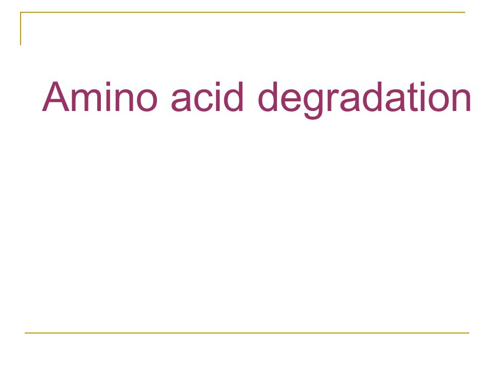 Amino acid degradation