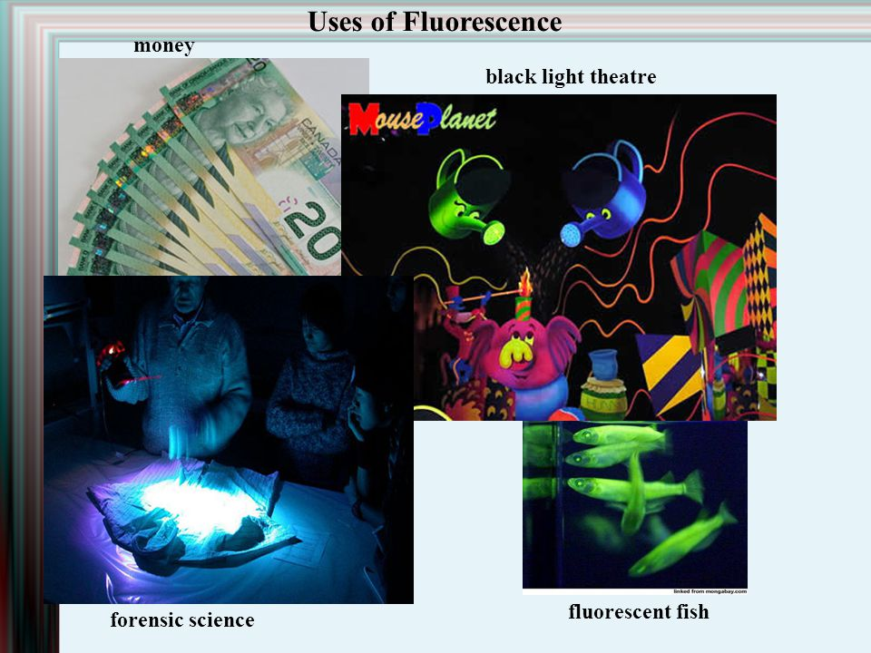 Uses of Fluorescence money black light theatre fluorescent fish
