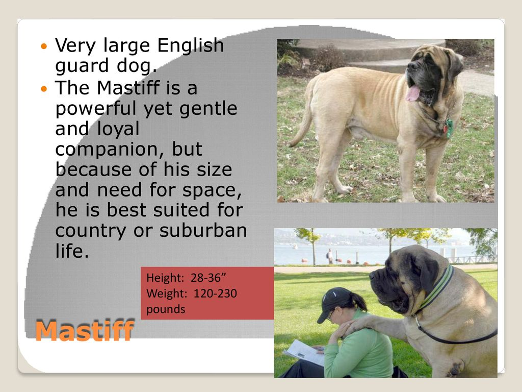 WORKING GROUP Dogs  - ppt download