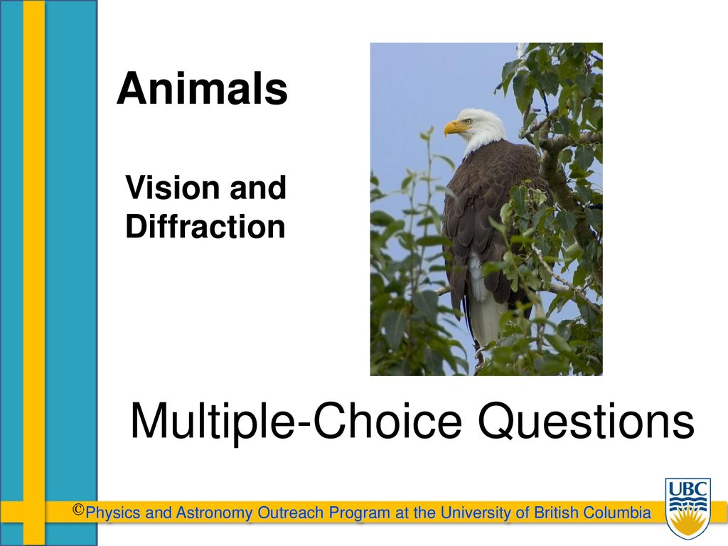 Multiple-Choice Questions - ppt download