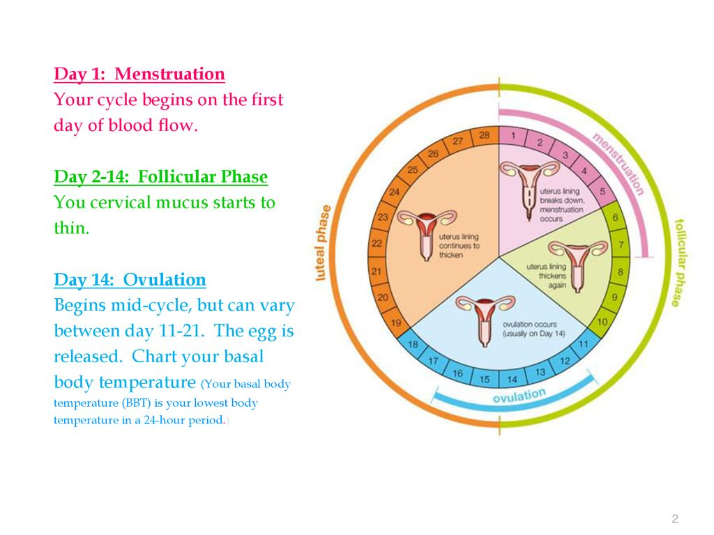The Menstrual Cycle Resources - ppt download