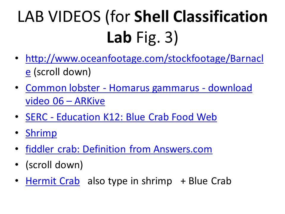 Binomial Nomenclature - ppt download