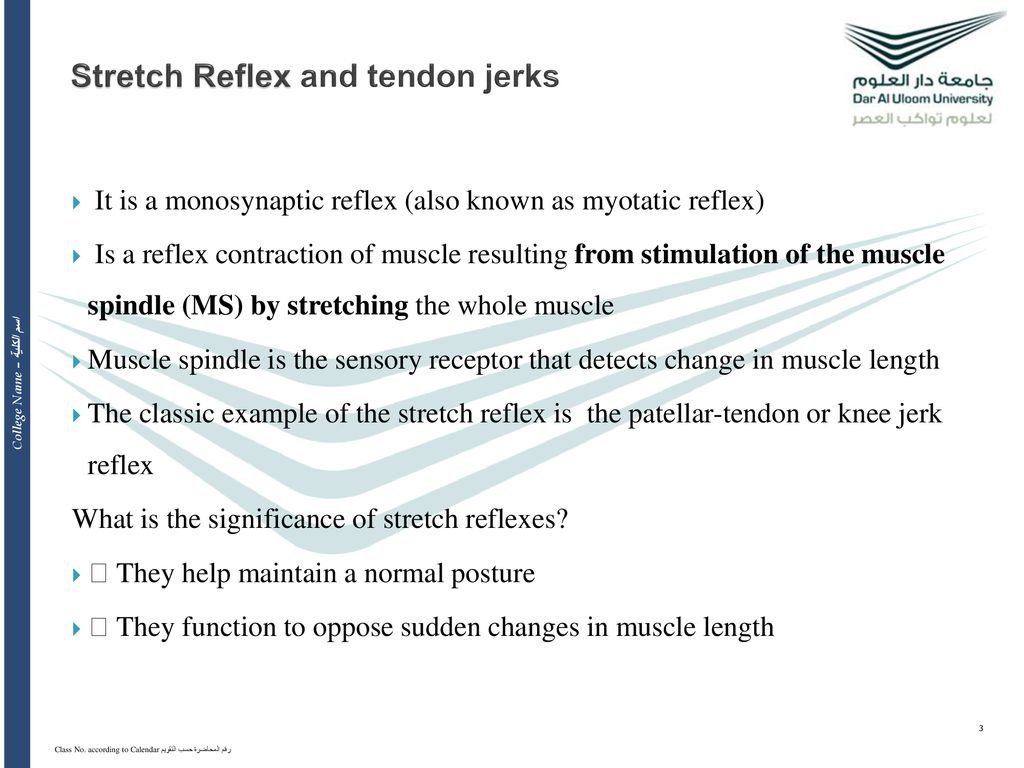 Stretch reflexes and tendon jerks - ppt download