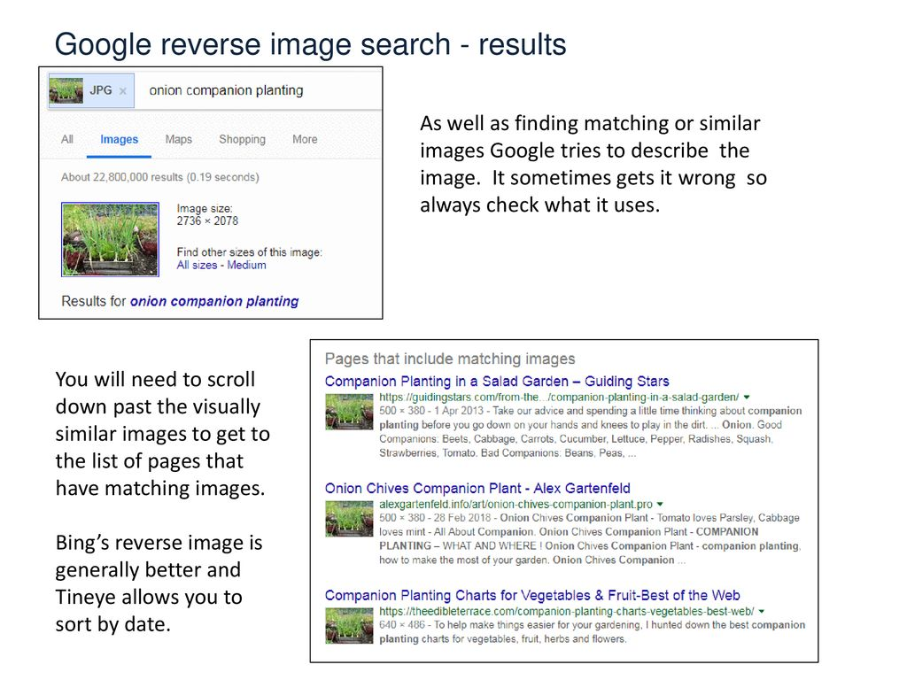 Image Search  - ppt download