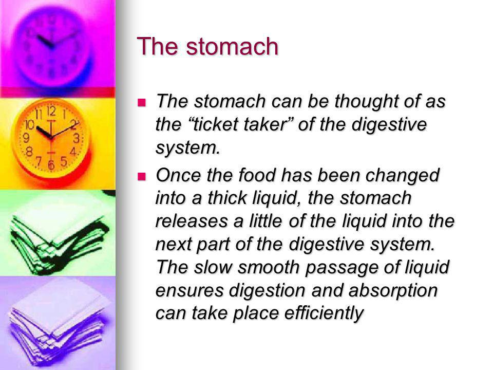 The stomach The stomach can be thought of as the ticket taker of the digestive system.