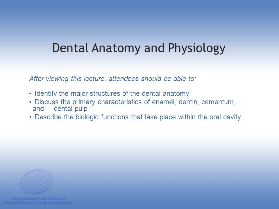Dental Anatomy Lecture Notes Image collections - human body anatomy