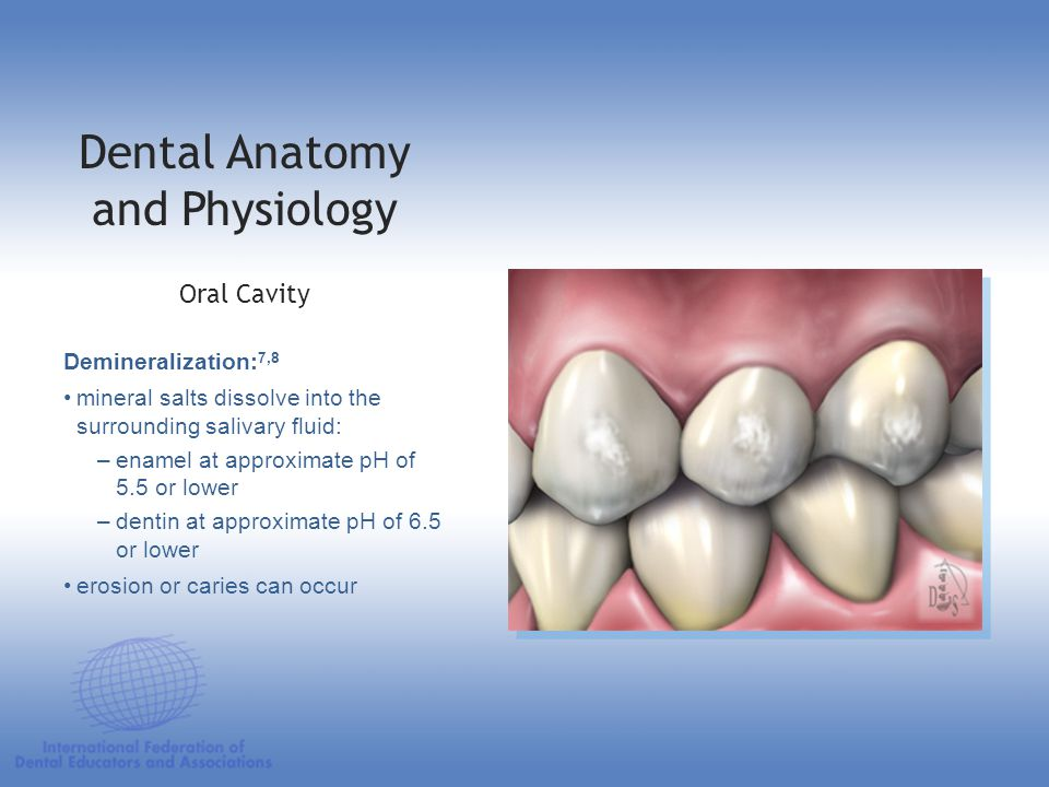 Dental Anatomy Physiology Ppt Download