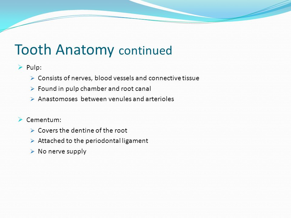 The Anatomy Physiology And Morphology Of Teeth Ppt Video Online